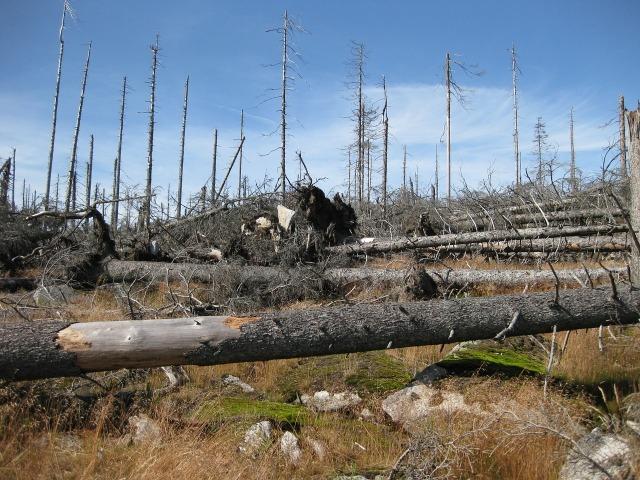 dead trees_grove-557850_1280