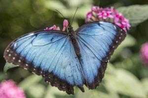 butterfly-956342_1280