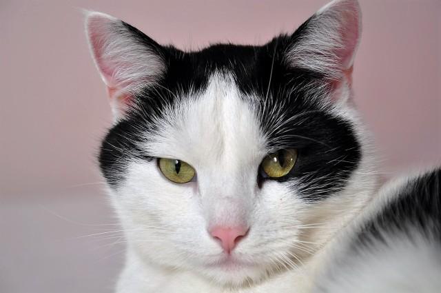 cats-796437_1920 (1) (2)