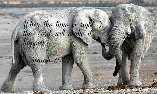 elephant-1170108_1920 (2)