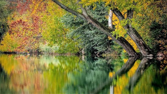 autumn-994897_1920 (2)