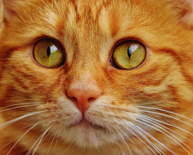 cat-1652880_1280